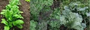 在家DIY種植10種最有營養價值的蔬菜